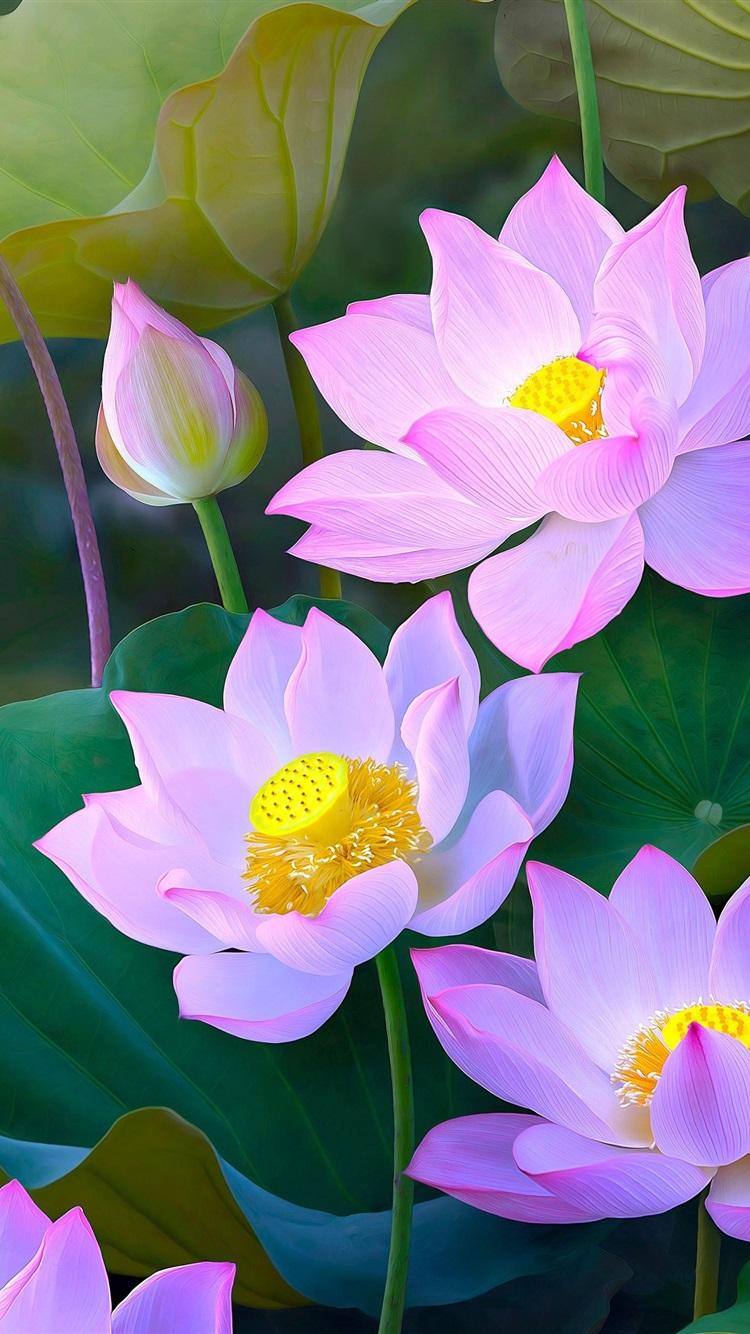 Wallpaper Beautiful Pink Lotus Painting Style 3840x2160