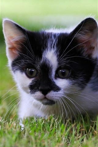 iPhone Wallpaper Cute kitten, grass