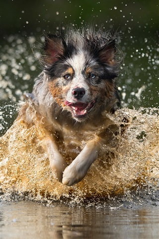 iPhone Wallpaper Dog running in water, splash, speed