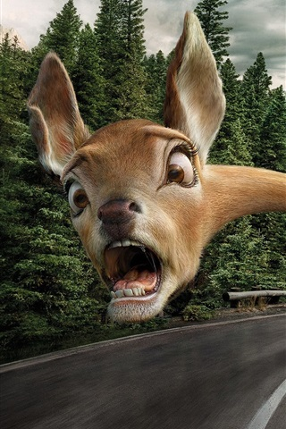 iPhone Wallpaper Funny animal, face, fear, long neck, road, creative picture