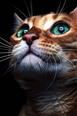 iPhone Wallpaper Green eyes cat look up, black background