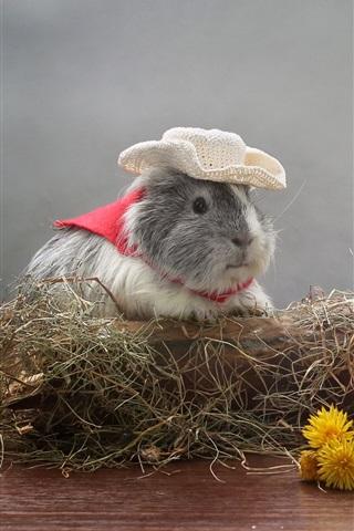 iPhone Wallpaper Guinea pig, dandelions flowers, hat, humor