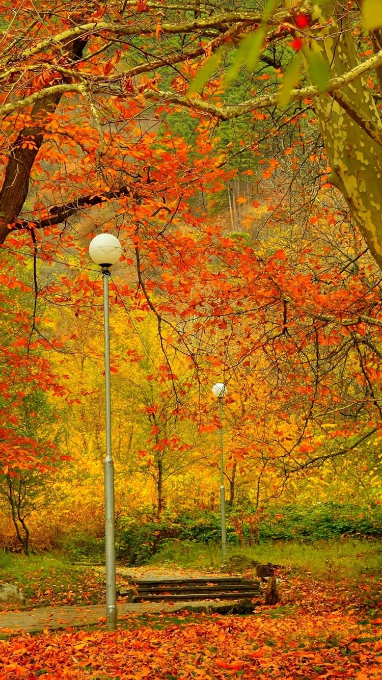 公園 樹木 ランプ 秋 750x1334 Iphone 8 7 6 6s 壁紙 背景 画像