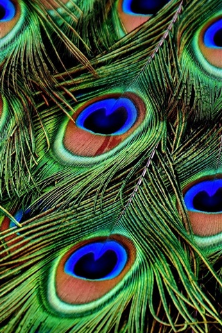 iPhone Wallpaper Peacock feathers macro photography