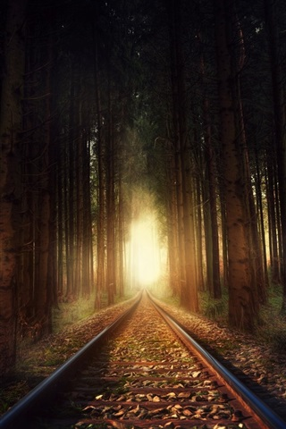 iPhone Wallpaper Railroad, trees, forest, light