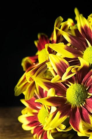 iPhone Wallpaper Some chrysanthemum, flowers