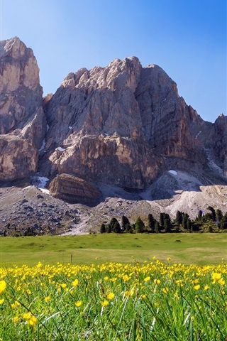 iPhone Wallpaper South Tyrol, Italy, mountains, yellow flowers, summer
