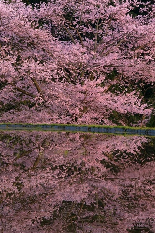 iPhone Wallpaper Spring pink flowers, tree, pond, water reflection, night