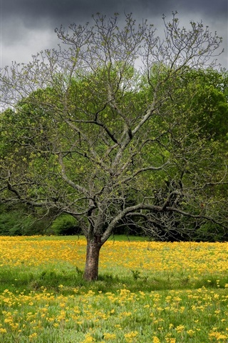 iPhone Wallpaper Spring, wildflowers, tree, clouds