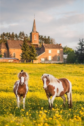iPhone Wallpaper Summer, grazing, meadow, three horses, yellow flowers