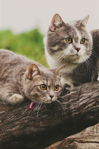 iPhone Wallpaper Two cute cats rest