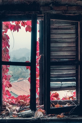 iPhone Wallpaper Window, red leaves, dust