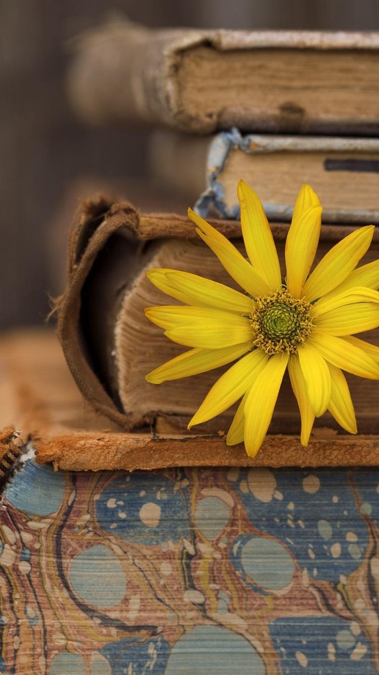 Books Yellow Flower 750x1334 Iphone 8 7 6 6s Wallpaper