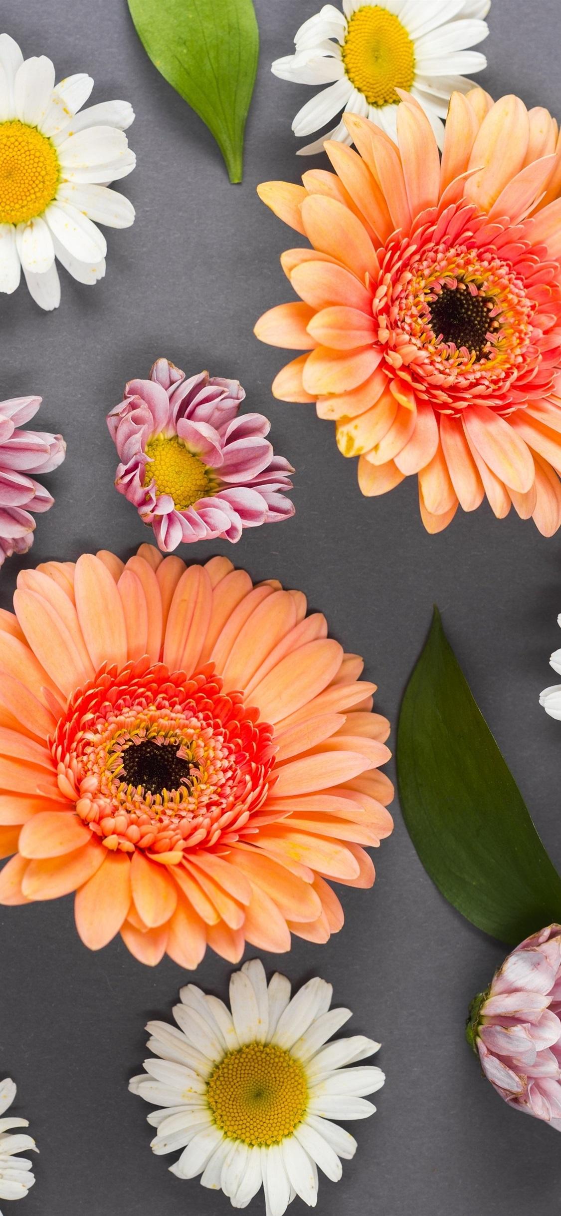 Colorful flowers, gerbera, chamomile ...