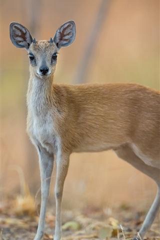 iPhone Wallpaper Deer, bokeh
