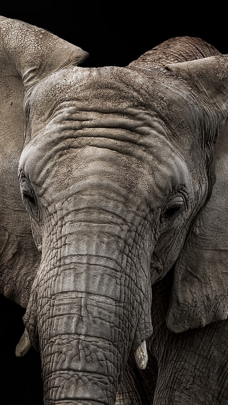 Elephant Black Background 750x1334 Iphone 8 7 6 6s
