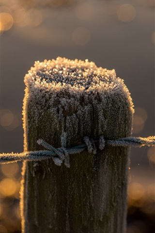 Fence, stump, frost, wire 640x1136 iPhone 5/5S/5C/SE