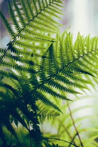 iPhone Wallpaper Fern, green leaves, backlight