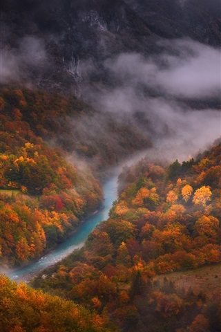 iPhone Wallpaper Forest, autumn, river, top view, fog