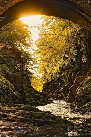 iPhone Wallpaper Forest, bridge, river, sunshine, moss