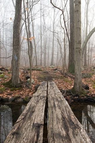 iPhone Wallpaper Forest, creek, wood bridge, fog