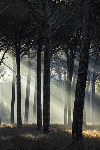 iPhone Wallpaper Forest, sun rays, grass, trees