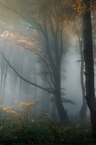 iPhone Wallpaper Forest, trees, haze, fog, morning