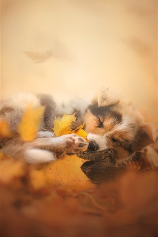 iPhone Wallpaper Furry dog in sleep, leaves, autumn, blurry