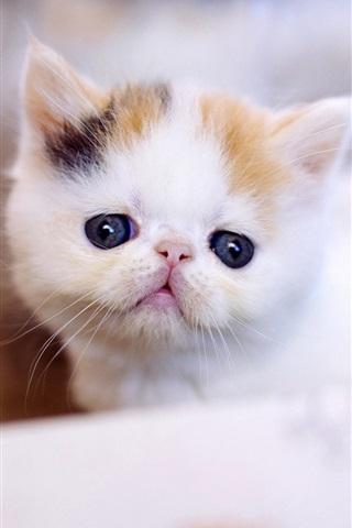 iPhone Wallpaper Furry white kitten, blurry