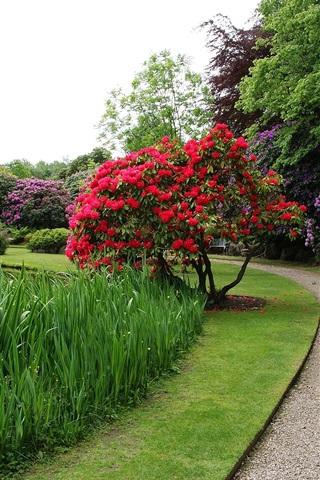 iPhone Wallpaper Garden, flowers bloom, spring