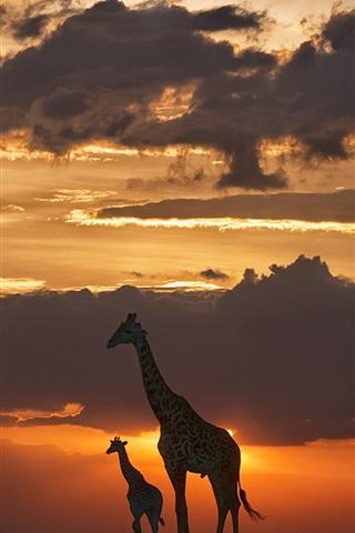 iPhone Wallpaper Giraffes, night, grass, sunset