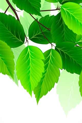 iPhone Wallpaper Green leaves, white background, art picture
