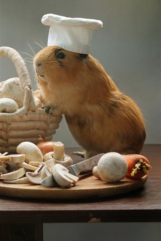 iPhone Wallpaper Guinea pigs, cooks, mushrooms, pan, funny animals