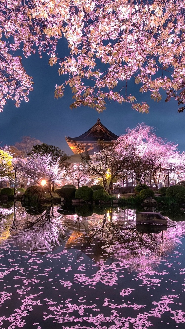 Fonds D Ecran Japon Sakura Arbres Fleurs Roses Nuit Etang