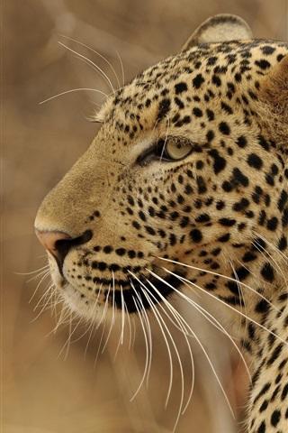 iPhone Wallpaper Leopard side view, predator