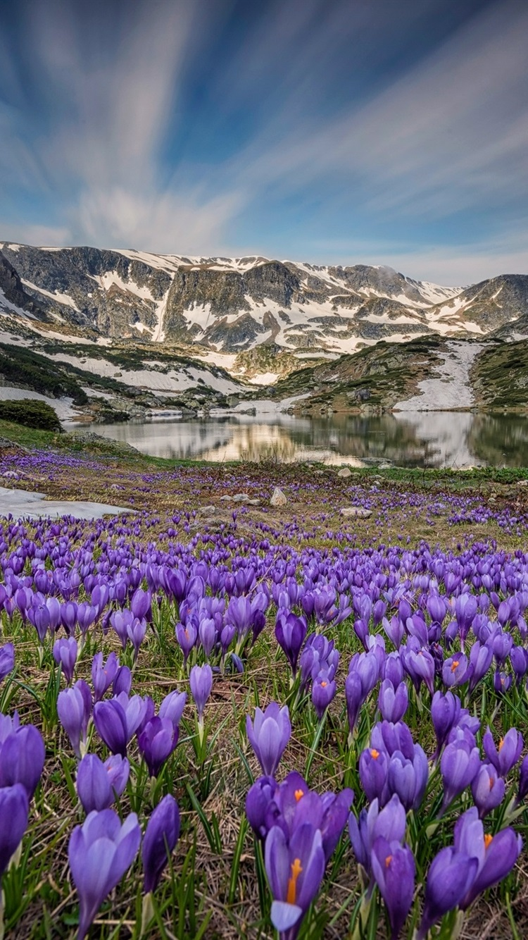 Wallpaper Many crocus blossom, lake, mountains, snow, spring 1920x1440 HD Picture, Image