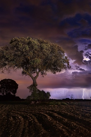 iPhone Обои Ночь, поля, деревья, молния, облака