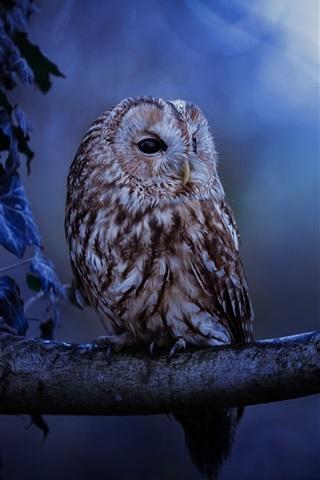 iPhone Wallpaper Owl, night, tree, leaves