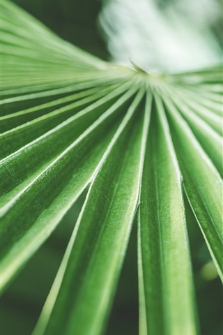 Palm Green Leaves 1125x2436 Iphone Xs X Wallpaper