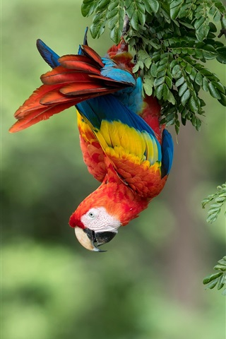 iPhone Wallpaper Parrot, macaw, colorful feathers, tree
