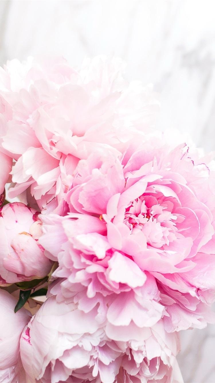 Обои на айфон пионы розовые