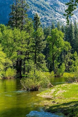 iPhone Wallpaper River, trees, green