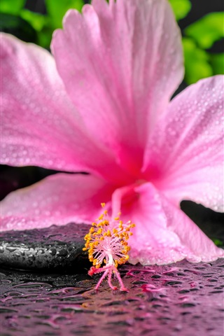 iPhone Wallpaper SPA, pink flower and candle, water droplets