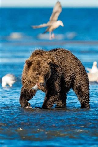 iPhone Wallpaper Sea, bears, birds