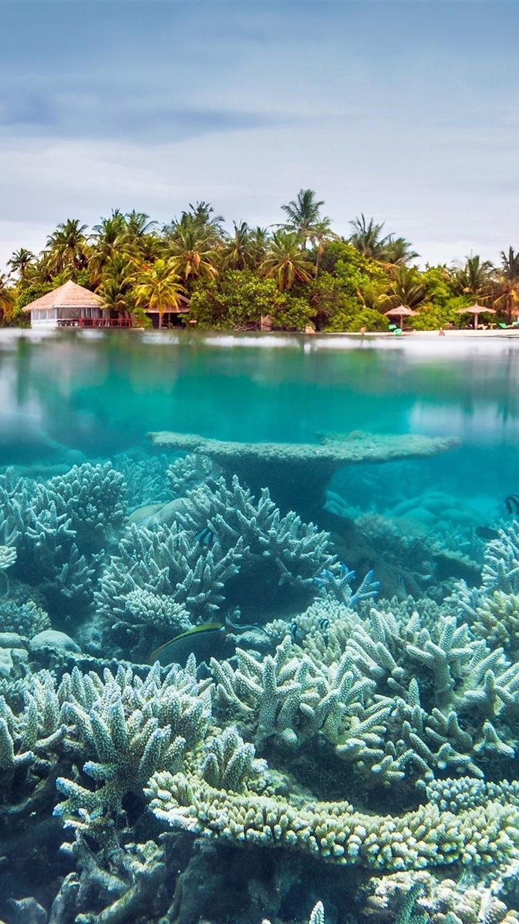 Sea Underwater Corals Island Resort 750x1334 Iphone 8 7