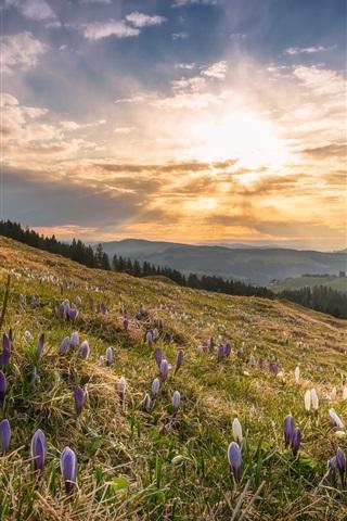 iPhone Wallpaper Spring, slope, flowers, sunshine