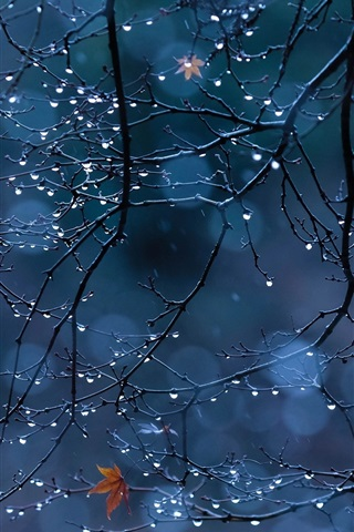 iPhone Wallpaper Tree branches, foliage, water drops