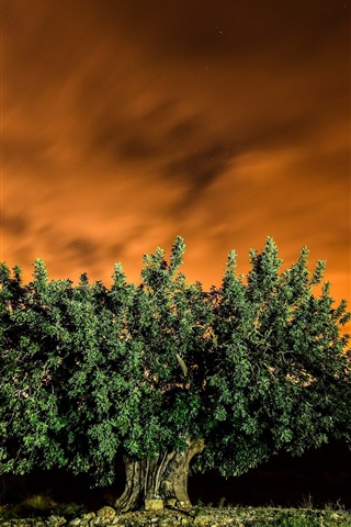 iPhone Wallpaper Tree, red sky, night