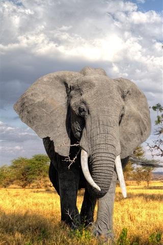 iPhone Wallpaper Trees, grass, elephant