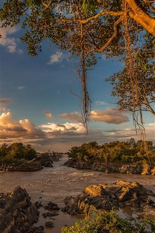iPhone Wallpaper Trees, stones, river, tropical